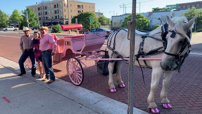Pink horse-drawn carriage to raise awareness for breast